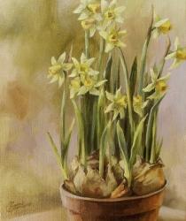 Narcises