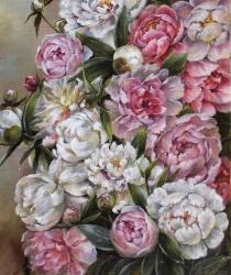 Peonijas baltā un rozā